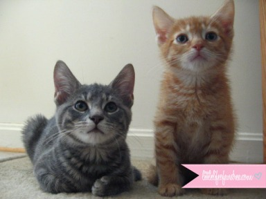 abu-mokey-kittens